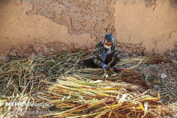 """Traditional 'Broom Weaving"""" in N Khorasan"""