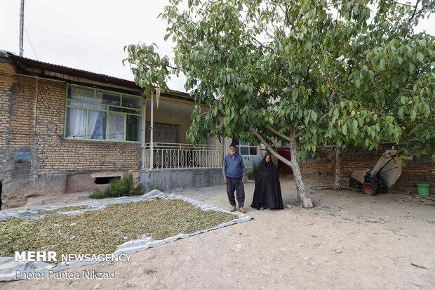 آقای محمدی نیز با مشکل آزاد سازی زمین های خود مواجه شده است و حتی نمی تواند آنها را به فرزندان خود واگذار کند تا برای ساخت و ساز اقدام کنند
