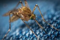 ویروس مرگبار «ای ای ای» کابوس تازه آمریکاییها