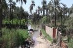 هراس روستائیان از نزدیک شدن به باغات خود در دیالی عراق