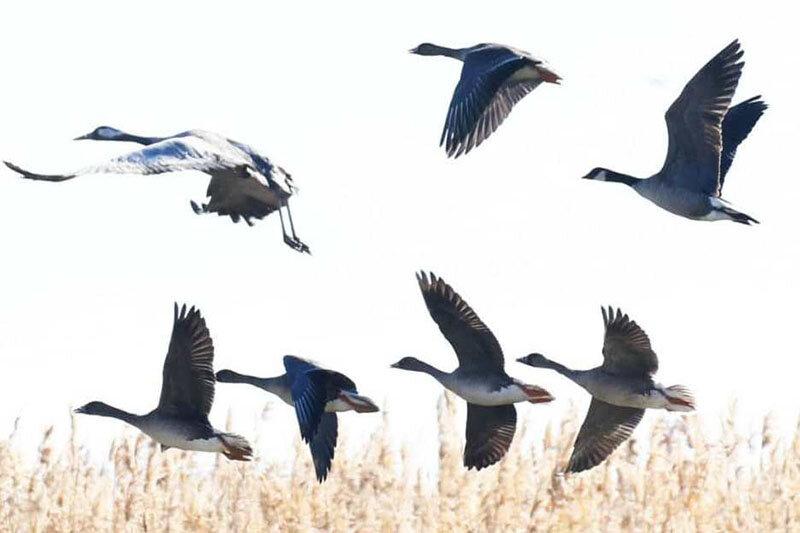 پرندگان،پروازي،هرمزگان،مسير،كوچ،مهاجر،وحش