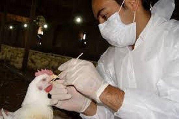 واکسیناسیون طیور رشد هفت درصدی داشته است