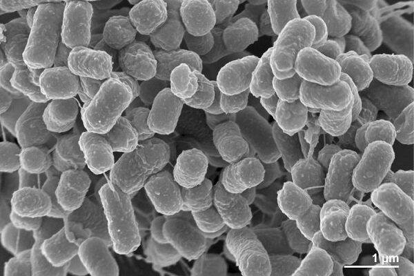 Iranian scientists register new bacterial species