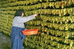 ۵۷۵۵ شغل روستایی وارد مدار تولید کشور شد