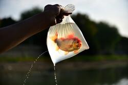 ماهیهای کف رودخانه
