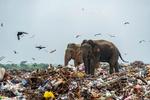 فیل های زباله خوار