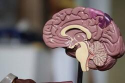 مسابقات دانش آموزی «دانش مغز» برگزار می شود