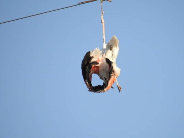 آسمان تالاب شادگان برای پرنده ها امن شد