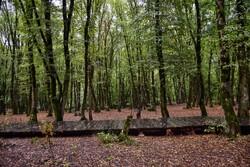 خط قرمز ما بهره برداری چوبی از جنگل های شمال است