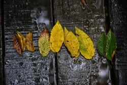 Yağmurlu havada Hirkan Ormanları'ndan çekilmiş güzel fotoğraflar