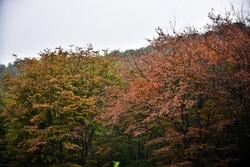 سند تنظیمی طرح ساماندهی گردشگری جنگلها و سواحل کشور بررسی شد