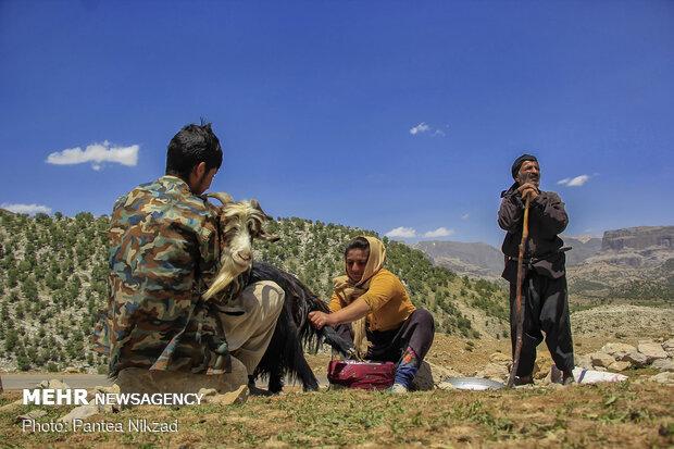 Bakhtiari nomadic lifestyle