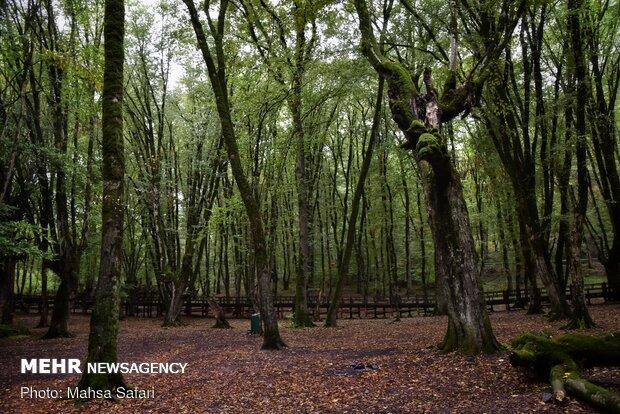 Hirkan ormanları