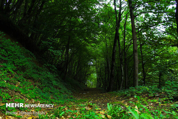Asalem to Khalkhal, spectacular forest road in Iran