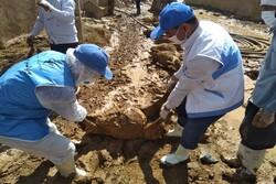 دفن بهداشتی لاشه ۴۸۸ راس دام تلف شده بر اثر سیل در هرسین