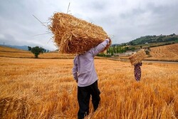 سیستم بانکی همچنان سد راه کشاورزان است/دولت حمایت کند