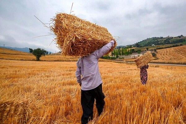 قرض برای ادامه تولید در زمینهای کشاورزی / برای خرید کود پول نداریم 2