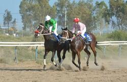 هفته پنجم کورس سوارکاری آق قلا/ ۵۶ راس اسب با هم رقابت کردند