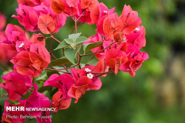 Flower gardens in Mahallat
