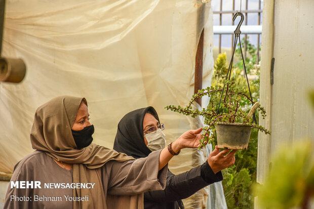 گلFlower gardens in Mahallat خانه های محلات - هلند ایران