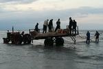 تصاویری از نخستین روز آغاز فصل صید ماهیان استخوانی در گیلان