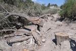 قطع درختان محدوده رودخانه «ماربره» / برای شهرداری دورود پرونده تشکیل شد