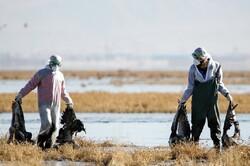 مهار بیماری آنفلوآنزای فوق حاد پرندگان در تالاب میقان/ کاهش تلفات