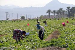 افزایش چتر بیمهای صندوق بیمه اجتماعی کشاورزان، روستاییان و عشایر