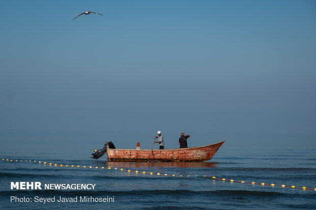 Fishing in Anzali