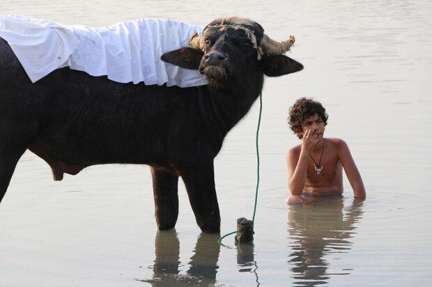 'American Bull' to take part in Sguardi Altrove FilmFest.