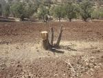 تصرف بیش از ۱۰۰۰ هکتار از اراضی ملی لرستان/ تشکیل ۹۲ پرونده قاچاق چوب بلوط