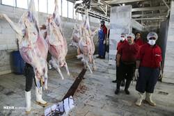افزایش ۴۰ درصدی عرضه گوشت قرمز در مقایسه با سال گذشته