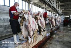 رشد ۱۸ درصدی عرضه گوشت گوسفند در آذرماه
