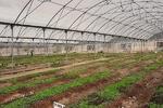 گلخانه پارک شرقی در سال ۴۰ میلیارد ریال صرفه اقتصادی دارد