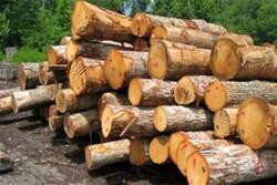 شرایط قرنطینه ای ایران برای واردات چوب فنی و استاندارد است