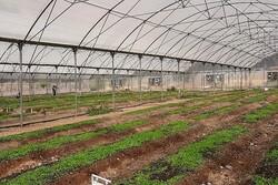 ضرورت اجرای سیستمهای نوین کشاورزی/ مزیتهای استان سمنان شناسایی شود