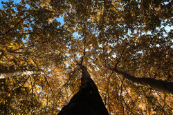 پاییزی ڕەنگامەی باکووری ڕۆژاوای ئێران