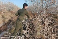 انجام ۲ عملیات شناسایی قاچاق چوب در شاهرود/ ۷ تن تاغ کشف شد