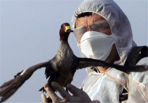 هیچ مورد آنفولانزا در گرگان مشاهده نشد