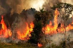 ارتفاعات جنگلی «توسکستان» دچار حریق شد