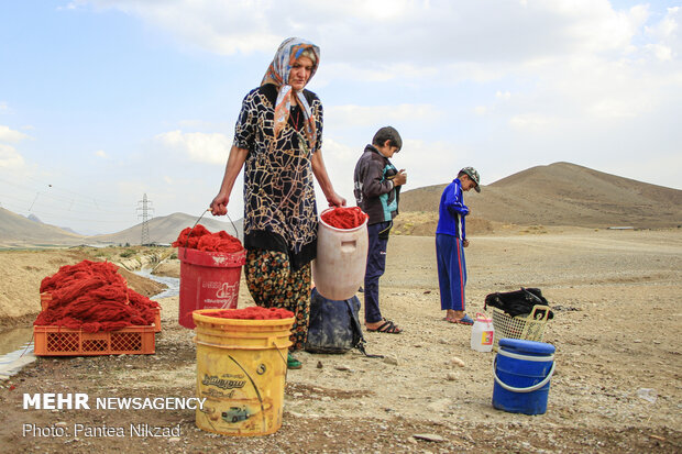 Traditional dyeing in SW Iran