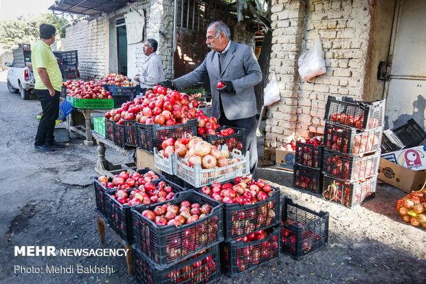 فروش محصول در محل ورودی باغ