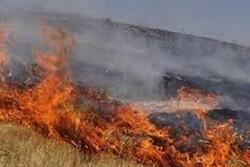 وقوع ۶ مورد حریق مراتع و پوشش گیاهی طی یک روز در همدان