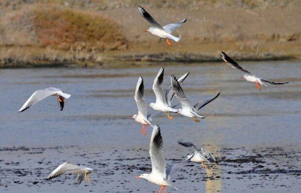 ۴۸ درصد گونه های پرندگان ایران در اردبیل زیست میکنند