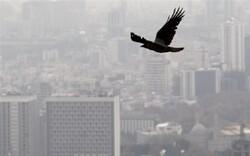 آلودگی هوا عامل مرگ ۱.۱ میلیون آفریقایی در سال ۲۰۱۹