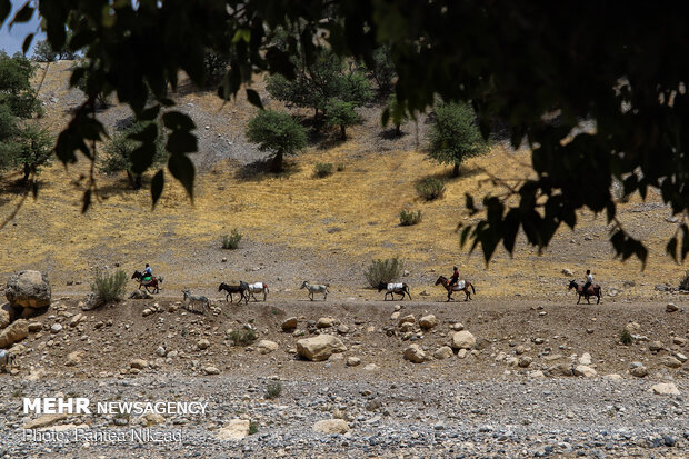 A peek into nomad's lifestyle in SW Iran
