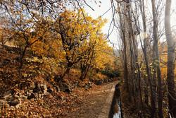 Hemedan'da muhteşem sonbahar manzarası