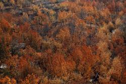 موسم خزاں میں باغات کے مختلف رنگ