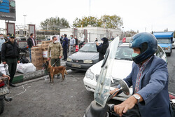 اجرای طرح کشف مواد مخدر توسط سگ های مواد یاب پلیس