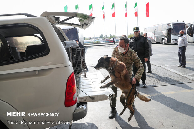 Sniffer dogs detect illegal drugs